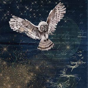 Karin's Night Owl 0094