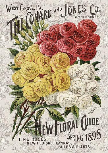 Roses catalogue 0104