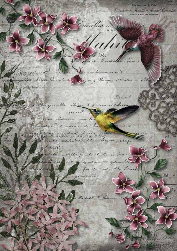 DQRP_0119 Hummingird Song