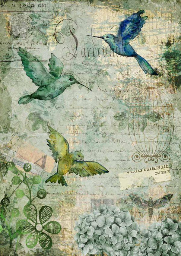 DQRP_0120 Afternoon Hummingbirds